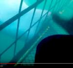 Cees Zuidhoff beleeft spannende momenten in haaienkooi