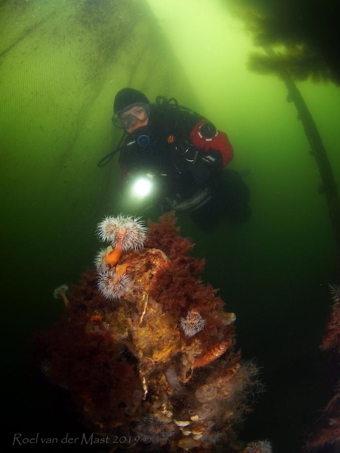 Grote fuik veroorzaakt gevaar voor duikers bij Geersdijk