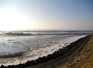 Rijkswaterstaat gaat hoeveelheid voedsel in Oosterschelde onderzoeken