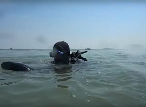 Duikteam Dusky redt baby bruinvis tijdens duik in Katshoek