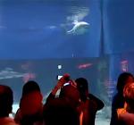 Witte haai sterft na 3 dagen in Japans aquarium