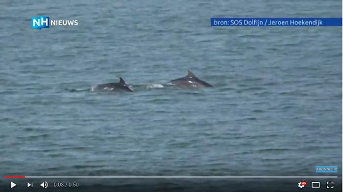 Beelden opgedoken van dolfijnen voor Noord-Holland