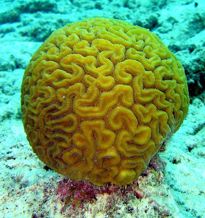 Universiteit Wageningen zoekt studenten voor koraalrifonderzoek op Bonaire