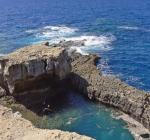 Duiker overlijdt in Dwejra, Gozo