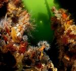 Maak kennis met deze onbekende duikstekken in jouw omgeving