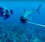 Lionfish voeren aan roofvissen brengt duikers steeds vaker in gevaar