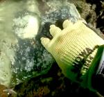 Duik de Noordzee schoon toont aan dat ramp MSC Zoë voortduurt