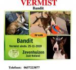 Duikers opgelet! Bullterrier Bandit vermist in de Zevenhuizerplas