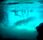 Zwemmer komt om in Blue Room Cave op Curaçao
