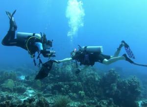 Adopteer een duikstek. Alle ins en outs
