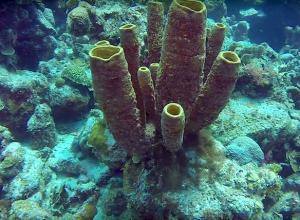 Veel nieuwe soorten ontdekt op koraalrif Bonaire