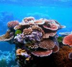 Koraalsoorten ontdekt die bestand zijn tegen extreme klimaatomstandigheden