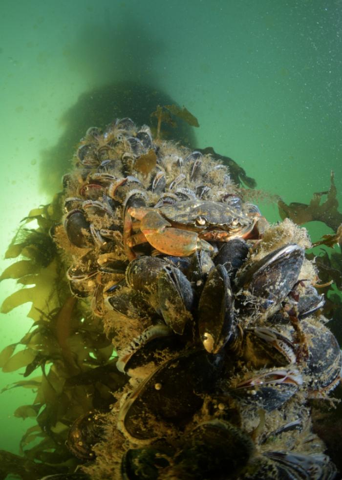 Zaterdag 30 november. Prijsuitrijking ONK Onderwaterfotografie en Video
