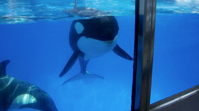 Tripadvisor doet attractieparken met walvisachtigen in de ban