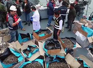 Schip onderschept met 12,3 miljoen illegaal gevangen zeepaardjes aan boord