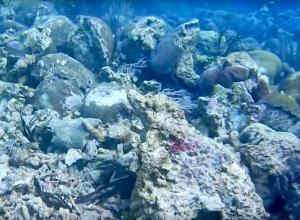 Koraal op Curacao vernield door olieplatform