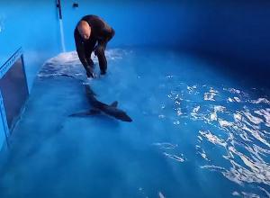 Aangespoelde bauwe haai met zuurstoftank naar Blijdorp gebracht