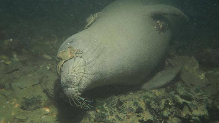 Dit wil je nooit zien tijdens je duik!