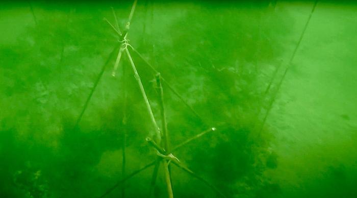 Bamboe rif aangelegd in de Oosterschelde