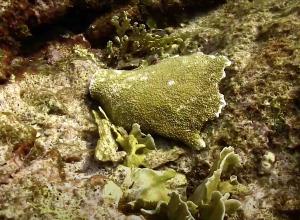 Vissersboot beschadigt bedreigde koraalsoort op Curacao