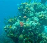 Koraalrif Bonaire herstelt van verbleking