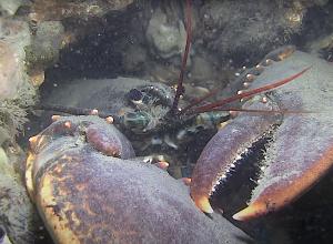 Stropers met duikuitrusting betrapt bij Goese Sas