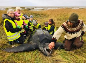 Lederschildpad Oosterschelde spoelt dood aan in Denemarken