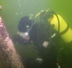 Lijnen aangelegd in duikplaats Grote Hegge