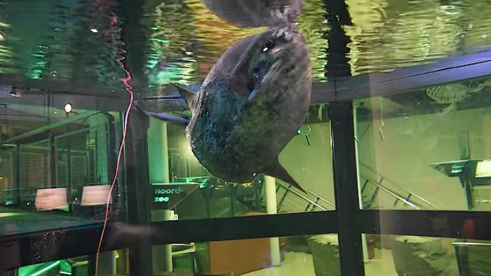 Maanvis in opvang Ecomare maakt het goed