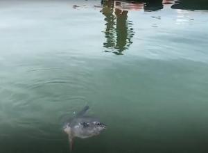 Levende maanvis aangetroffen bij duikplaats Het Buitenveld