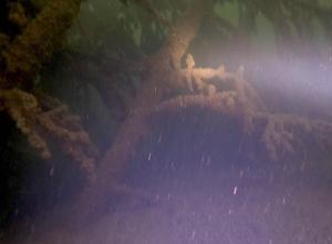 Duikers ontdekken groot onderwaterbos