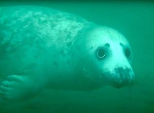 Als een zeehond jouw buddy wil zijn