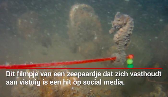 Video Dive Post Zoetermeer met zeepaardje aan vistuig gaat viral