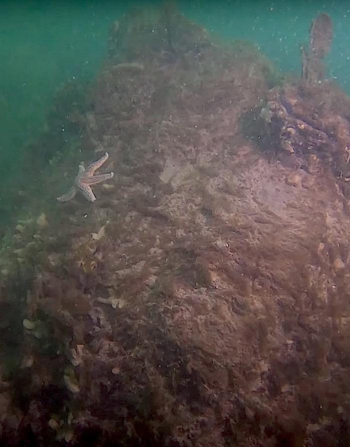 Nieuwe breuksteenriffen in de Oosterschelde