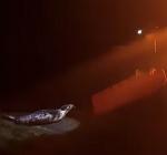 Politie druk met overstekende zeehonden Brouwersdam