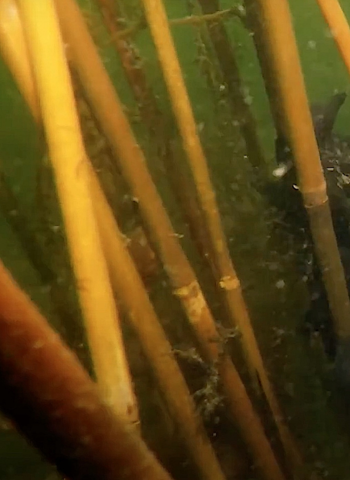 Eerste sepiastokken bij de Zeelandbrug geplaatst