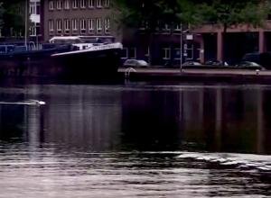 Vrouw kan niet geloven wat in Delfshavense Schie zwemt!