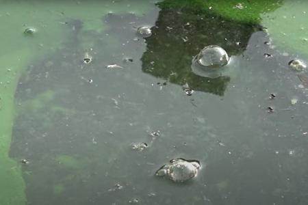 Negatief zwemadvies Oostvoornse Meer