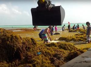 Dikke laag zeewier treft Bonaire ook in 2020