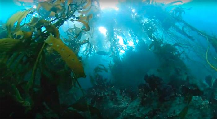Dit is duiken in Californië. Truly amazing..!