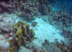 Curaçao krijgt onderwaterstation voor wetenschappelijk onderzoek