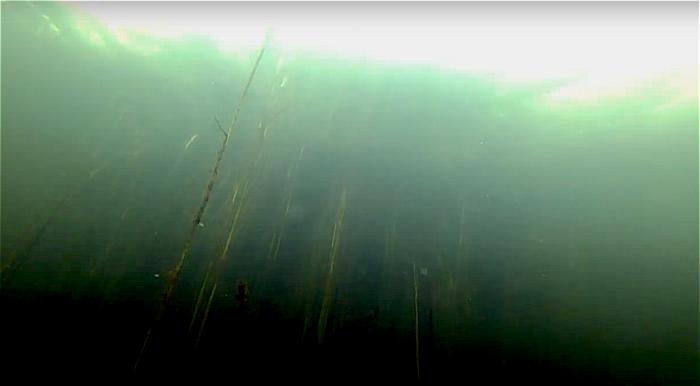 Dit is de enige Nederlandse duikstek met een halocline!
