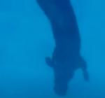 Hoe diep kan een hond duiken?