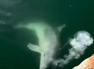 Dolfijnen verschijnen in kanalen Venetië na lockdown