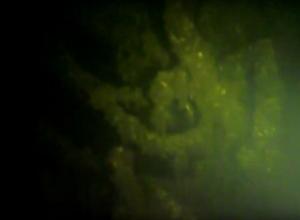 Ken je de enorme boom van Eiland 4?
