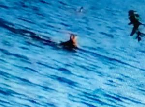 Tijdens lockdown gebeurt ineens dit in een duikstek!