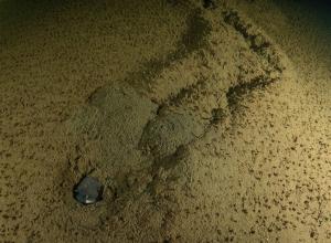 De stek met de honderden 'onzichtbare' palingen