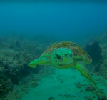 Schildpad showt optimaal drijfvermogen. Perfect!