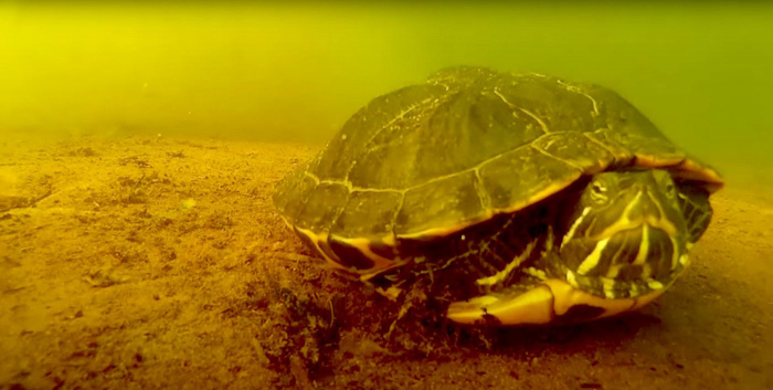 Schildpadden in duikstekken. Leuk of schrijnend?