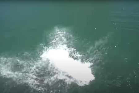 Zwemmers blijven een probleem in Put van Ekeren